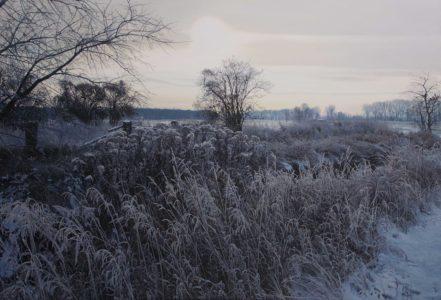 Verwilderter Garten im Winter